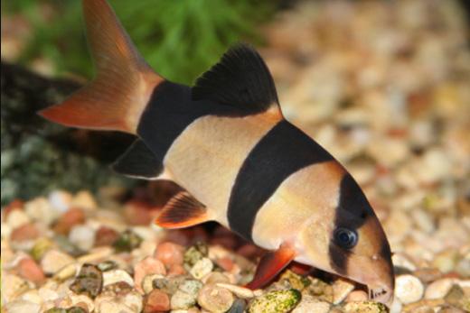 Frisby Aquatics Community Tropical Fish